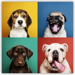 Купить Картина на холсте Очаровательные щенки в Беларуси от 13.00 BYN