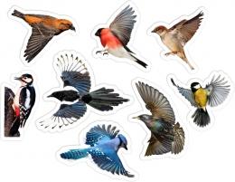 Купить Комплект фигурных двухсторонних элементов для оформления детской площадки Птицы в Беларуси от 91.00 BYN