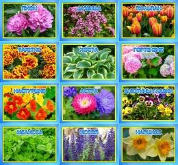 Купить Комплект табличек для экологической тропы цветы 12 шт 200*140мм в Беларуси от 37.00 BYN