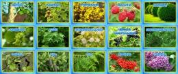 Купить Комплект табличек для экологической тропы деревья и кустарники 15 шт., 200*140мм в Беларуси от 46.00 BYN