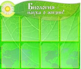 Купить Стенд Биология - наука о жизни! в кабинет биологии 8 карманов 1000*850мм в Беларуси от 123.00 BYN