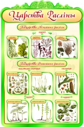 Купить Стенд Царства раслiны в кабинет биологии на белорусском языке 600*900мм в Беларуси от 65.00 BYN