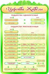 Купить Стенд  Царства  жывёлы в кабинет биологии на белорусском языке 600*900мм в Беларуси от 62.00 BYN