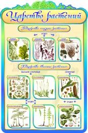 Купить Стенд  Царство растений в кабинет биологии в золотисто-бирюзовых тонах 600*900мм в Беларуси от 65.00 BYN