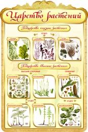 Купить Стенд Царство растений в золотистых тонах 600*900мм в Беларуси от 65.00 BYN