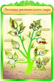 Купить Стенд Эволюция растительного мира в кабинет биологии 600*900мм в Беларуси от 62.00 BYN