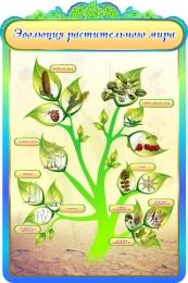 Купить Стенд Эволюция растительного мира в кабинет биологии в золотисто-бирюзовых тонах 600*900мм в Беларуси от 65.00 BYN