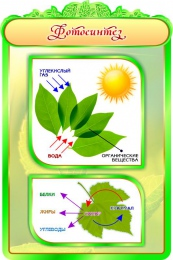 Купить Стенд Фотосинтез в кабинет биологии 600*900мм в Беларуси от 62.00 BYN