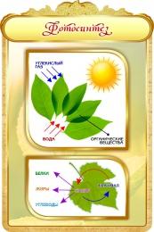 Купить Стенд Фотосинтез в золотистых тонах 600*900мм в Беларуси от 62.00 BYN