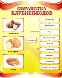 Купить Стенд Обработка клубнеплодов в золотисто-красных тонах 690*860мм в Беларуси от 70.00 BYN