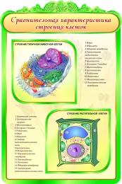 Купить Стенд Сравнительная характеристика строения клеток в кабинет биологии 600*900мм в Беларуси от 65.00 BYN
