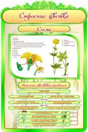 Купить Стенд Строение цветка в кабинет биологии 600*900мм в Беларуси от 62.00 BYN