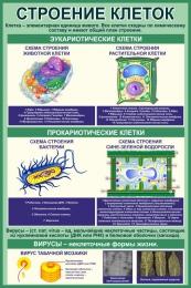 Купить Стенд Строение клеток в кабинет биологии в зеленых тонах 760*1150 мм в Беларуси от 95.00 BYN