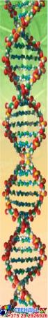 Стенд фигурный Бiялогiя- навука аб жыццi! в кабинет биологии на белорусском языке 1900*900мм Изображение #2