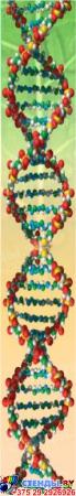 Стенд фигурный Бiялогiя- навука аб жыццi! в кабинет биологии на белорусском языке 1900*900мм Изображение #5