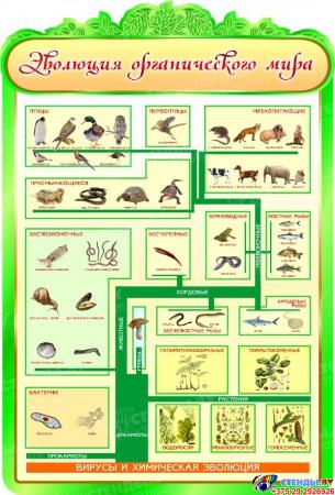Стенд Эволюция органического мира 900*1320мм