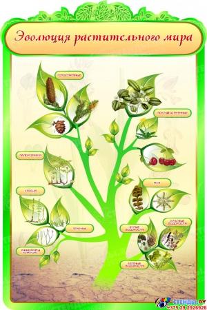 Стенд Эволюция растительного мира в кабинет биологии 600*900мм