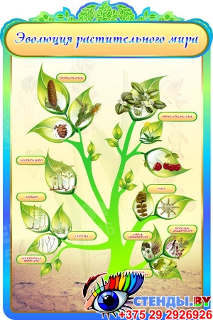 Стенд Эволюция растительного мира в кабинет биологии в золотисто-бирюзовых тонах 600*900мм