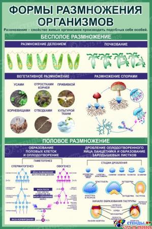 Стенд Формы размножения организмов в кабинет биологии в зеленых тонах 760*1150 мм