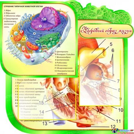 Стенд фигурный Биология- наука о жизни! в кабинет биологии со строением растительной клетки 2800*1020мм Изображение #1