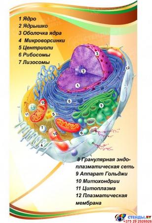 Стенд фигурный Биология - наука о жизни! 1900*650мм Изображение #1