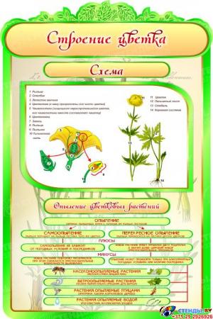 Стенд Строение цветка в кабинет биологии 600*900мм