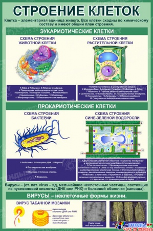 Стенд Строение клеток в кабинет биологии в зеленых тонах 760*1150 мм