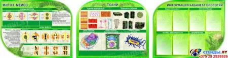 Стендовая композиция в кабинет биологии Строение клетки ткани растений 3300*850 мм